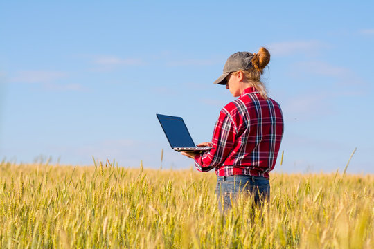 Girl farmer standing in a wheat field with a laptop.
