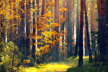 Autumn forest. Fall nature.