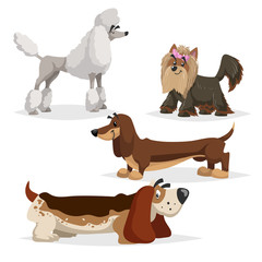 Cartoon purebred dogs set. Poodle, yorkshire terrier, dachshund and basset hound. Cheerful and aodrable pets. Vector illustrations with shadows isolated on white background.