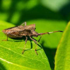 Dock Bug