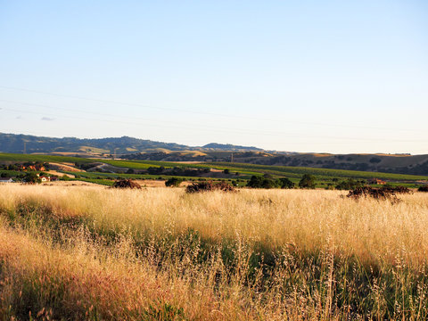 Golden grass field and hills at sunset on Greenville Road at Tesla Road, Livermore Wine Country, California