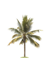 Coconut tree isolated on white background.Tree isolated on white background concept.