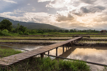 Rice fields have just started to grow. And bamboo is made into bridges, walkways and lounges.