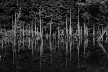 池に佇む木々