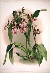 Ilustracja botaniczna kwiaty