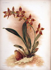 Illustration of flower