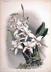 Ilustracja białe kwiaty