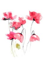 Red poppies on white background, watercolor hand painted, floral art