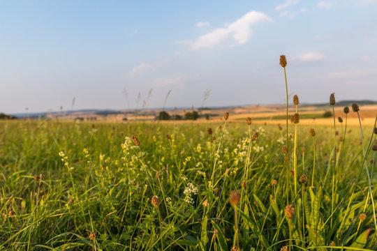 Felder an einem Sommerabend in Hessen