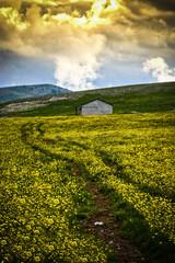 Mountains Landscape field of flowers