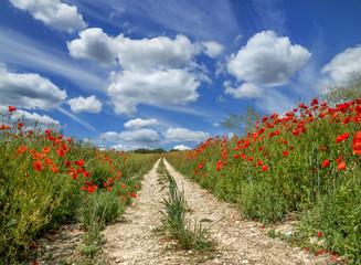 Fotobehang Poppy Poppy Trail