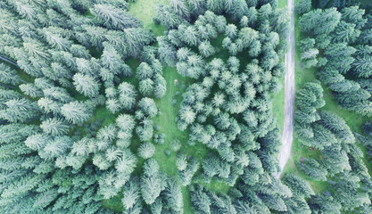 Overhead downward view of road across firs in the forest