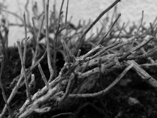 Wooden Branches - Black & White Macro