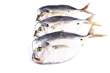 Three Vomero  fish  on a white background (isolated). Close up