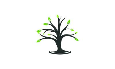 plant garden vector