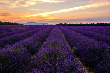 Garden Poster Lavender Champ de lavande en Provence, le Mont Ventoux en arrière-plan. Coucher de soleil.