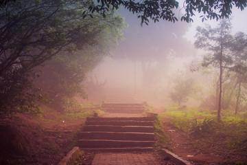 Morning Mist At Hill Station,Karnataka, India