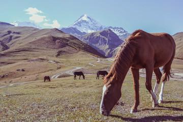 Horses grazing in meadow on mountains background, Kazbegi, Georgia