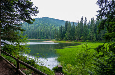 A beautiful landscape near Lake Synevir on the mountains is covered with fir trees. Carpathians. Ukraine