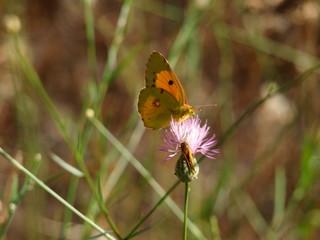 mariposa verde amarilla
