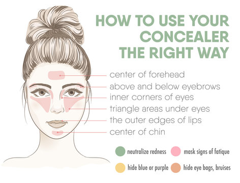 How to apply your concealer the right way infographic chart.