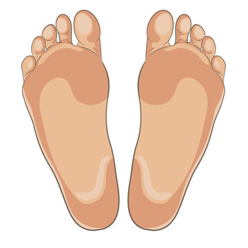 Left and right foot soles illustration for footwear, shoe concepts, medical, health, massage, spa, acupuncture centers etc. Realistic cartoon style, colored with skin tones. Vector isolated on white.