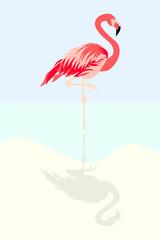 Flamingo bird vector illustration background
