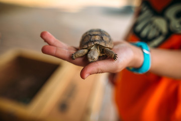 Young Child Holding Baby Tortise in Hand