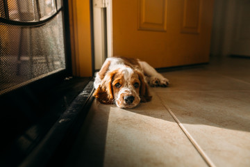 Puppy Resting in Open Door