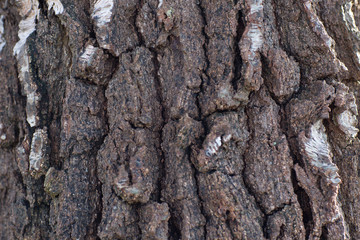 alte spröde hölzerne Baumrinde. Natürliche Beschaffenheit der Rinde die rau und rissig ist wie haut. brauner Hintergrund Muster. braune graue Holzstruktur Nahaufnahme