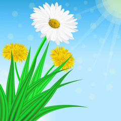Vector image of realistic flowers of chamomile and dandelion in grass. Greeting card with a summer day