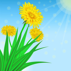 Vector image of realistic flowers of dandelion in grass. Greeting card with a summer day