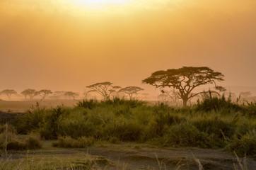 African safari landscape
