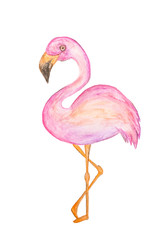 Pink flamingo bird, tropical style watercolor painting on real paper