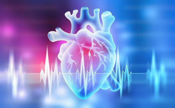 Human heart. 3D illustration on a medical background
