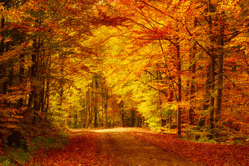 Printed roller blinds Autumn Beautiful sunny autumn landscape with fallen dry red leaves, road through the forest and yellow trees