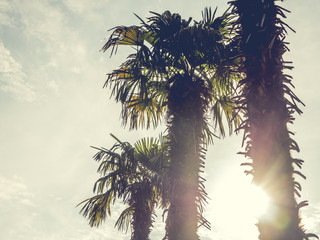 vintage toned palm trees against the sky