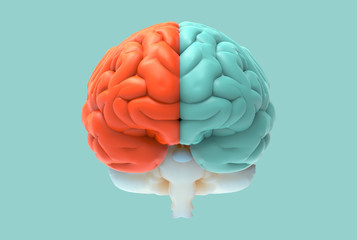 3D brain illustration with left and right function concept