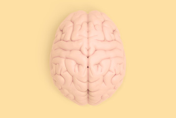 Human brain in top view isolated on yellow pastel BG