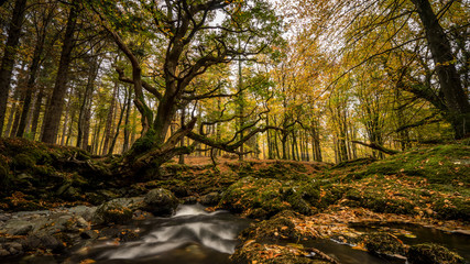River Shimna. Tollymore Forest Park, Northern Ireland.