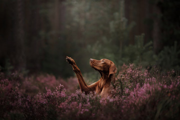 Hungarian breed dog. The pet gives the paw in flowers. summer time
