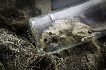 Dead rat in a jar