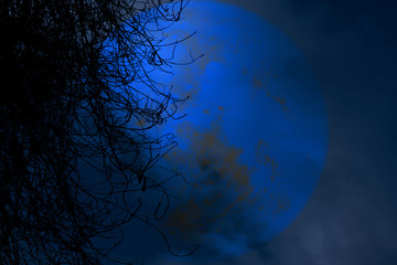 full beaver moon back silhouette dry tree in night sky