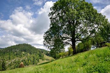 landscape on mountains