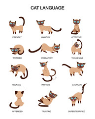 Cat language and feelings meaning. Cute cat expressions isolated on white background. Vector illustration.