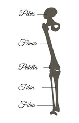 Pelvis and Femur Poster Title Vector Illustration