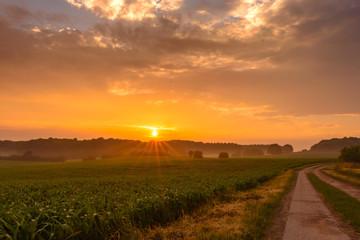 Sonnenuntergang an einem sommerlichen Tag hinter einem nebelbedecktem Feld