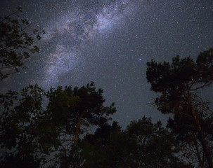 Milky Way in the night sky over the forest