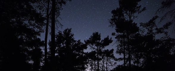 Stars over night forest