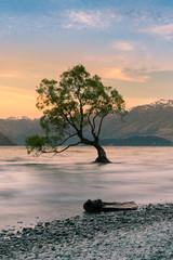 Alone Tree on Wanaka Water lake, New Zealand natural landscape background